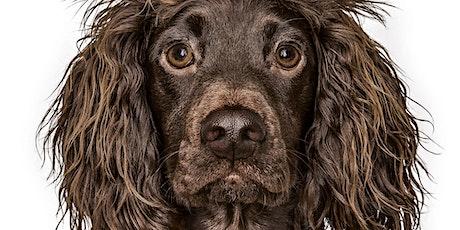 Animal Welfare Event - Paddington Recreation Ground tickets