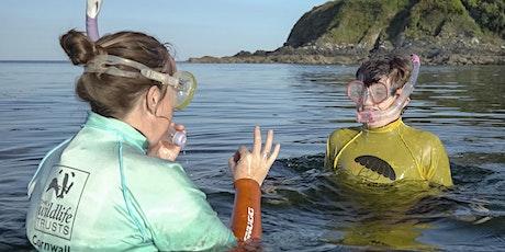 Explore the Shore - Snorkel Safari tickets