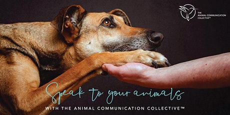Speak To Your Animals with The Animal Communication Collective ™ tickets