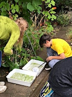 Summer Holiday Activities - Pond dipping, Wildlife