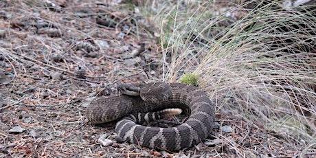 Snakes & Snake Smarts @ Kekuli Bay tickets