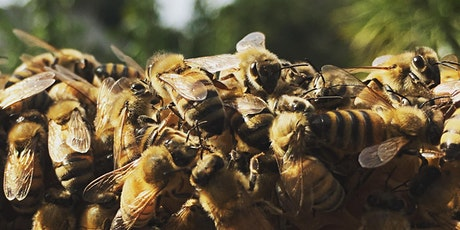 Preparing Your Hive for Winter (Beekeeping) tickets