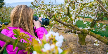Capturing Springtime Flora at Cherry Hill Orchard tickets