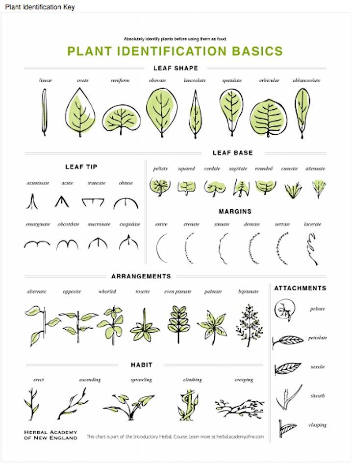 Plant & Mushroom Foraging-Identification Walk image