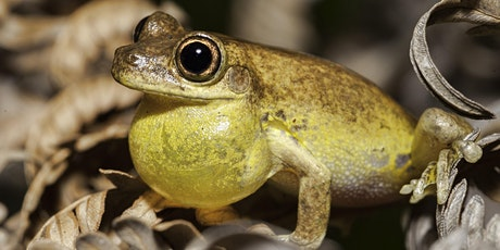 NaturallyGC Fauna of the Coast Frogs tickets