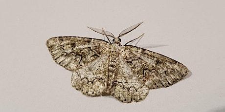 Watch Moths September (Zoom event) tickets