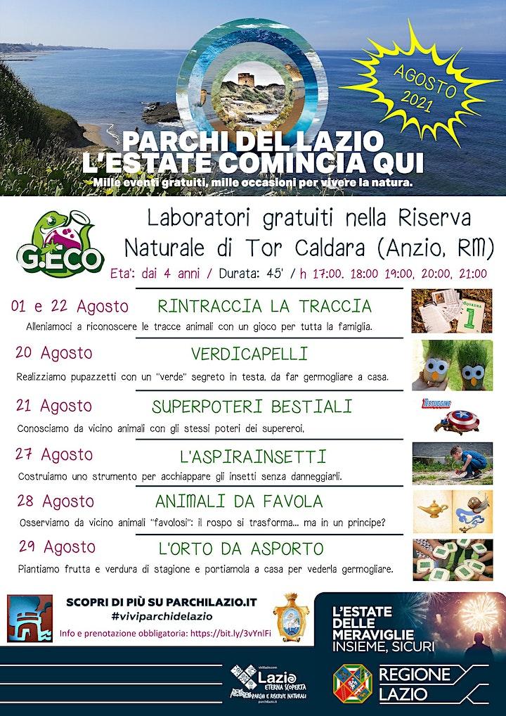 Immagine #ViviparchideLazio - Laboratori G.Eco alla Riserva di Tor Caldara