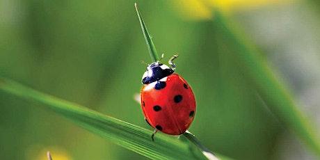 TCV  'Mini Beast / Bug Explorers'  -  ( PM) Workshop tickets