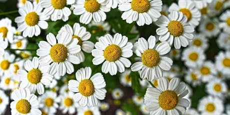 Garden Herbs and Natural Remedies (Virtual Workshop) tickets