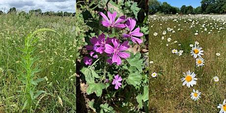 Wednesday Wildflower Walks with Jane Lawson - 18 August tickets