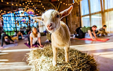 Goat Yoga in the 305 tickets