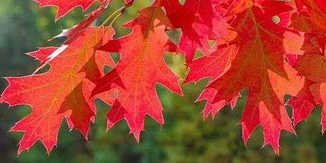 Name that Tree! Trees with Leaves that Fall (Deciduous Tree Walk) tickets