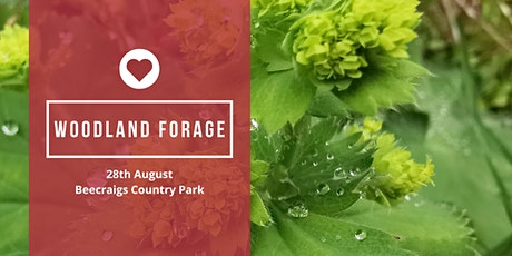 Fungi & Wild Plant Foraging Walk tickets