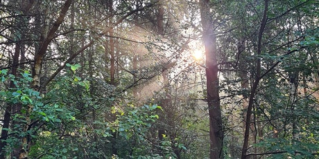 Forest Bathing + at NT Nostell tickets