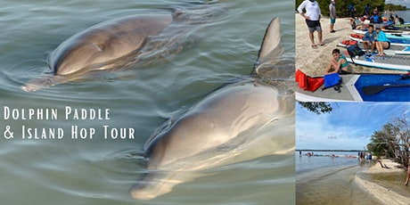 Dolphin Paddle and Island Hop Tour tickets