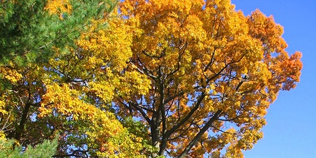 Gentle Giants Bike tour: See the Largest Trees in Long Branch! tickets