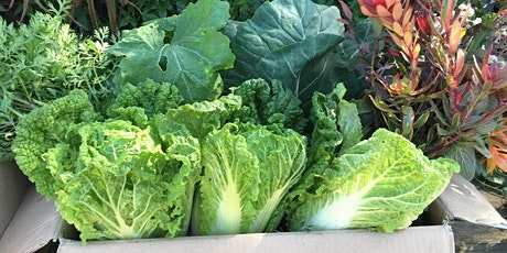 IN PERSON! Grow Your Own Food in October tickets