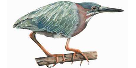 Birds of Lake Merritt book launch event with author-illustrator Alex Harris tickets
