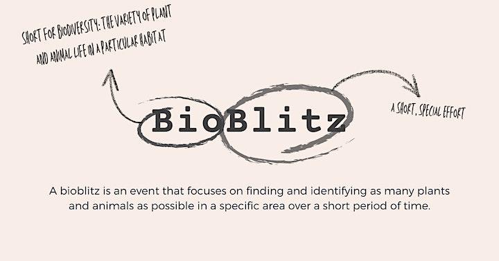 BELGRAVE, VIC: BioBlitz and BBQ at Birdsland Reserve  image