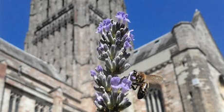 Worcester Cathedral Grounds and Gardens tour tickets