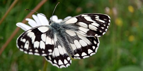 Guided butterfly and wildflower walk at Dollypers Hill nature reserve tickets