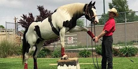 David Davis Horsemanship & Trick Training Clinic tickets