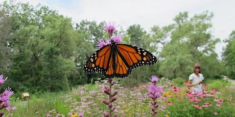 Fletchers Creek SNAP Butterfly Survey tickets