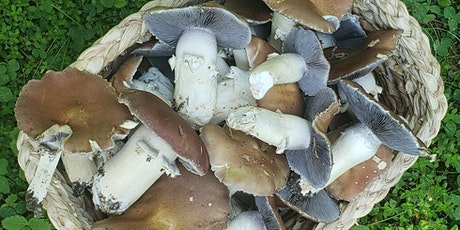 Foraging and Feasting: Learn Wild Edible Plants and Mushrooms tickets