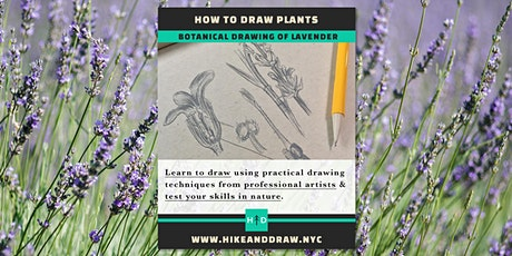 How to Draw Plants: Lavender tickets