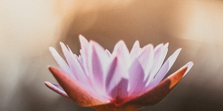 Online Mindfulness and Meditation for Beginners 8 Week Class tickets
