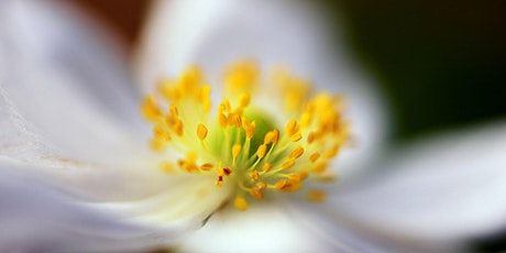 Getting Outside - A Field Guide to Macro Photos - ONLINE w/Nikon tickets