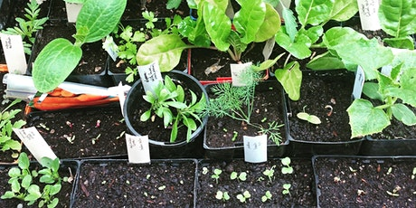 Growing vegies from seed tickets