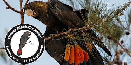 Glossy Black-Cockatoo Birding Day 2021 - Glossy ID workshops tickets