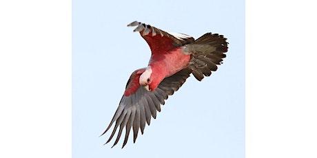 Bird photography with David Hartney - Rosebud Library tickets