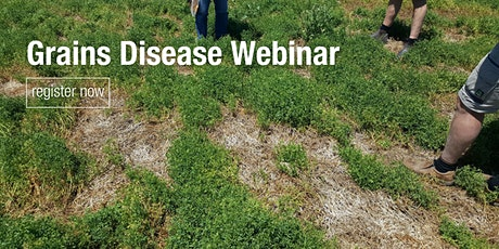 What's that symptom? Know your cereal and pulse diseases  webinar tickets
