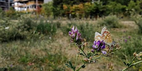 Butterfly Identification Walk at Burgess Park tickets