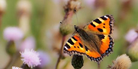 Online Butterfly Identification Workshop tickets