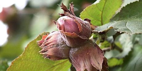 Hazelnuts in Agroforestry Twilight Tour tickets