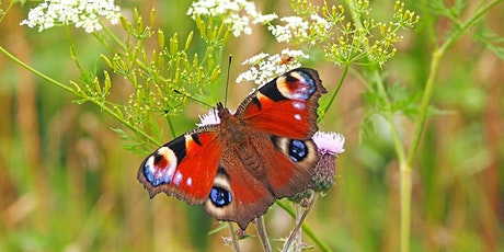 Butterfly Identification Walk at Holland Park tickets
