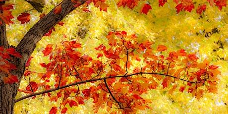 Autumn in the Arboretum tickets