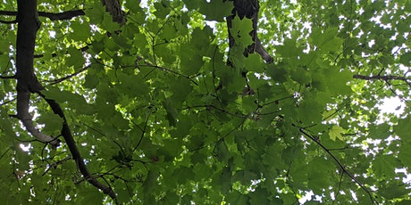 Maple Tree Walk: Learn About the Most Iconic Canadian Trees! tickets