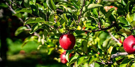 Action day in the Sidings Community Orchard tickets