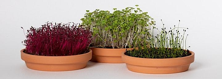 Microgreen 101: Learning to garden in small spaces! image