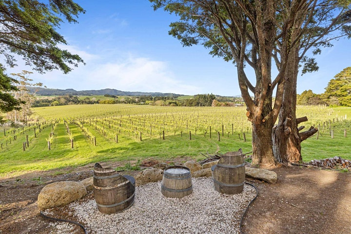 Winter in the Vines image