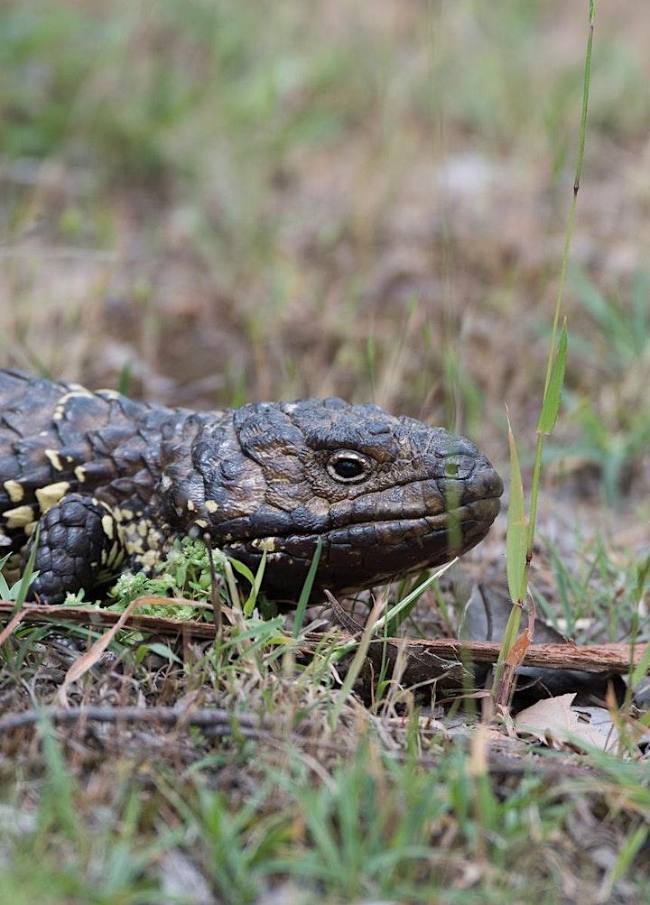 Echidna Ridge Bushland Experience image
