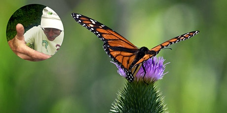 Virtual Walk - Butterflies & Skippers: Tracking Nature's Clock Tickets