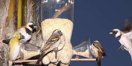 Make a Bird Feeder at Sawtry Library - A Summer Reading Challenge event tickets