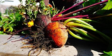 Summer Garden Programme: Magic Outdoor Cooking and Harvest tickets
