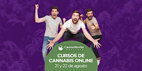 ONLINE   Cannabis Training Camp   CannaWorks Institute entradas