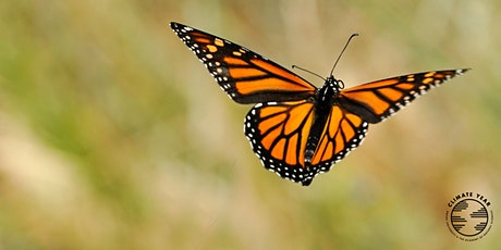 Academy Conversation: Insects in Decline tickets